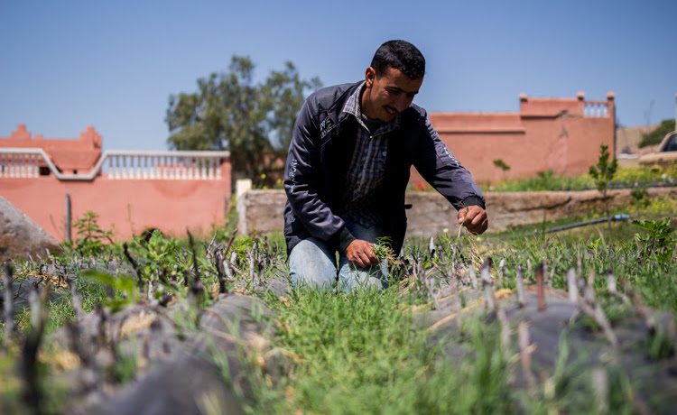 Photo: Aberrahim is the caretaker at the Akrich nursery, the first of the High Atlas Foundation's fruit tree nurseries built on land lent in-kind by the Moroccan Jewish Community