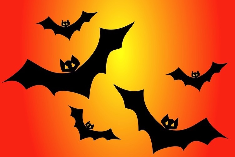 Photo: Bats. Credit: Pixabay