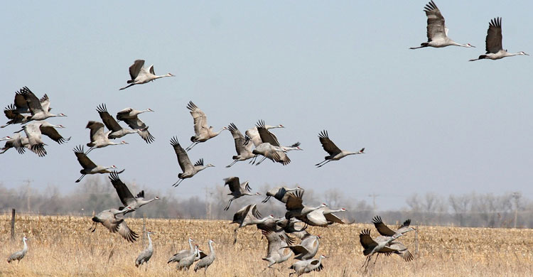 Photo: A new study has highlighted gaps in protection for migratory birds globally. Credit: CMS